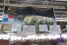 There were many cattle farms represented with large banners telling about their business, and then signs telling about the individual animals
