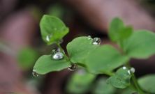 After it rains, sometimes we are rewarded with beautiful water droplets on plants.