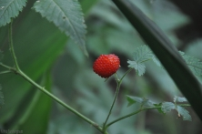 If you know where to look, you can be rewarded with mora berries.