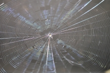 I am always fascinated by the symmetry, but not perfection of a spider's web especially when it shimmers in the sunlight.