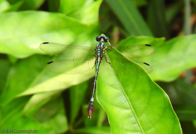 Here is the beauty and symmetry of a dragonfly.