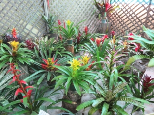 There was a section of bromeliads too.