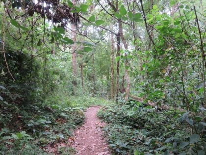 The path continues through the greenery.
