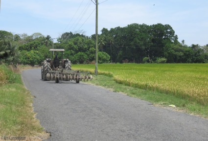 A tractor passes a pretty rice field.