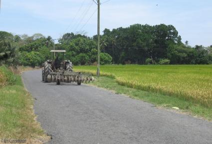 A tractor passes a pretty rice field.