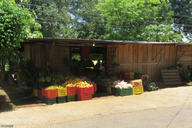 It is handy to pull up to the back of the market because it's easy to park back there. Here you can see watermelons, lemons, oranges, more plantains, papayas, pineapples, and some ginger root.