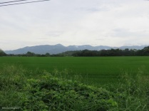there was some beautiful scenery. I love the green rice fields.