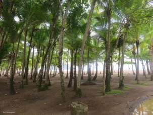 there are pretty trees as well as open space at the beach