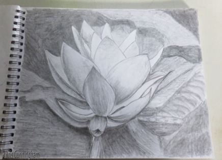 That was the spark I needed. I found a photo of a lotus from my Florida pond and tried drawing it.