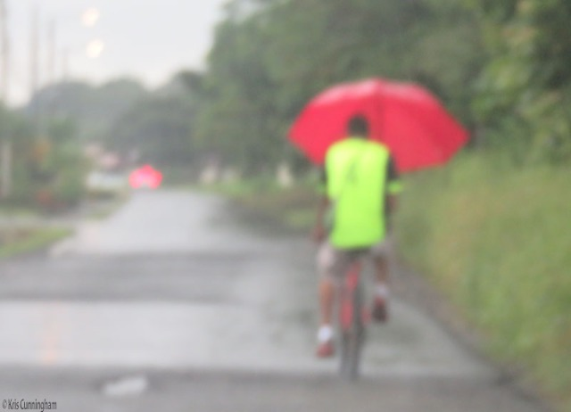 On another day we were in the car in the rain, and saw this interesting way of keeping dry on a bicycle.