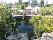 There is this pretty pond and lots of plants and flowers.