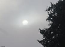 The sun tries to shine through the fog.