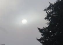 The sun tries to shine through the fog.