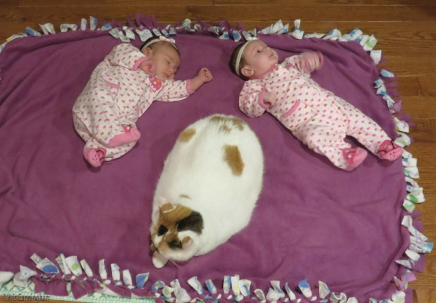 Two babies and a cat names Coos