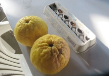 I took a photo of a couple of the lemons next to an egg carton for size comparison.