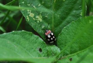 It looks like a tiny ladybug