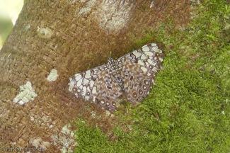 Pretty butterfly on a tree