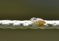 more clothesline wildlife, this time a tiny spider