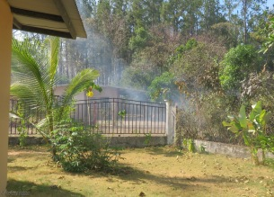 Fire continues to smolder outside our fence. This area inside the fence was very full of leaves but look now, the fire didn't even come here.