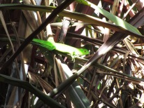 Sometimes we get visited by very green baby iguanas