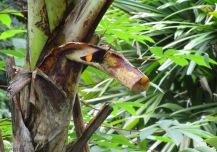 Then it landed on a cut stem