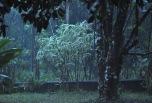 More evening rain.