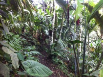 You could walk on paths through the woods, but the woods were mainly more heliconias and other flowers and plants