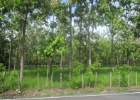We passed a teak farm