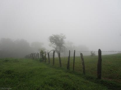 As we wait in the field, the fog rolls in