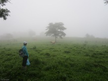 Eventually the fog clears a bit, and a cow comes walking and mooing towards us.