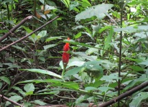 Quite a few of these interesting plants were blooming in the woods