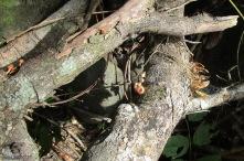 Interesting things on a fallen tree