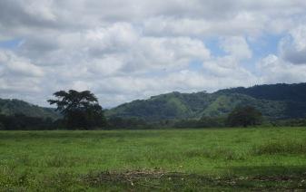 Beautiful green hills beyond