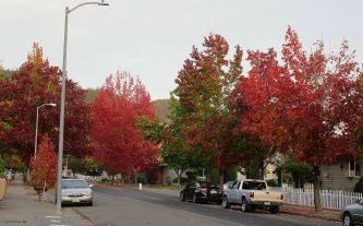 Pretty fall foliage