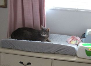 The cat figured the changing table was a good place for a nap