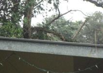 iguana on the roof