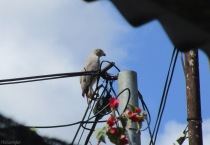 This beautiful hawk flew silently through the yard and landed on the utility pole.
