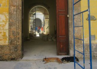 a building under renovation, and a couple unconcerned dogs