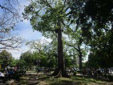Parque El Curita