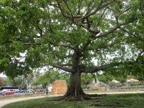 a cool tree