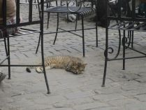 another very contented cat at a beer brewery place