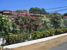 Some more bougainvilleas and other flowers