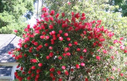 very cool looking bush