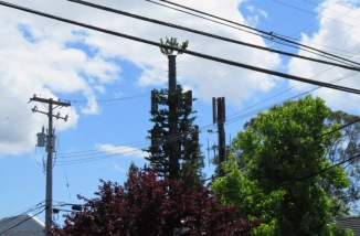 They often disguise cell phone towers with fake branches to make them look like pine trees. This is not one of the more successful examples.