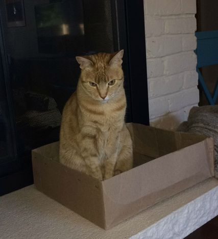 The cat is only able to enjoy the box when the baby doesn't notice.