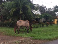some horses wandering the neighborhood