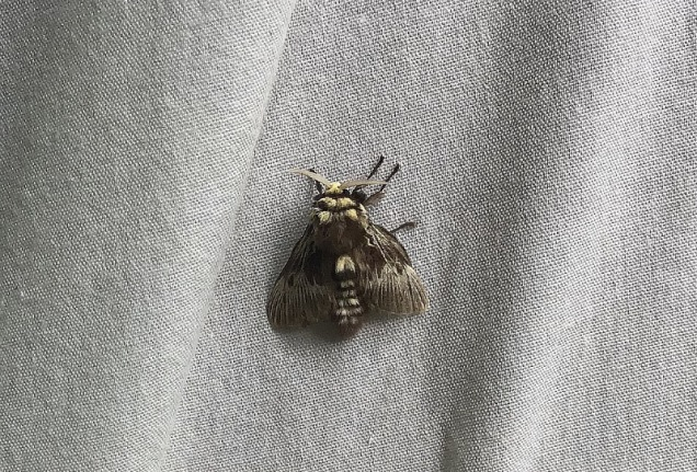 What a beauty of a moth!