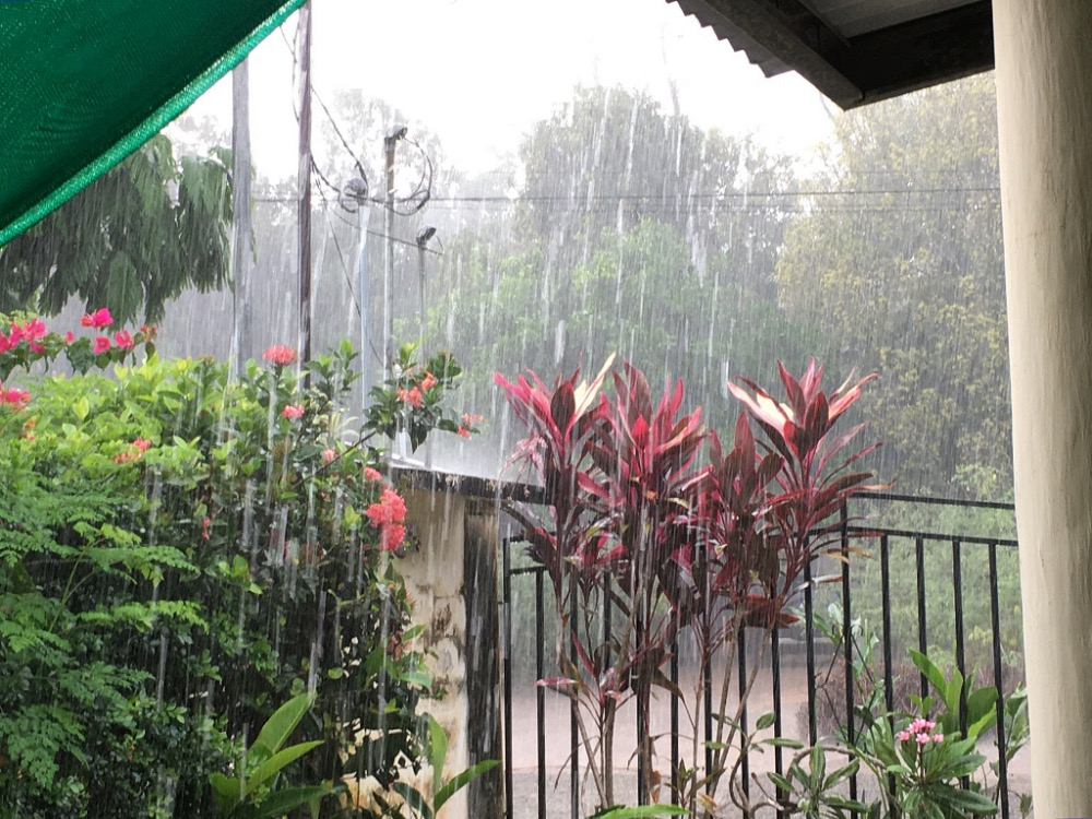 It's supposed to be summer and dry season now, but we got one heck of a short but intense downpour this afternoon! Now it's cool and all the plants are happy. Thank you for the rain.
